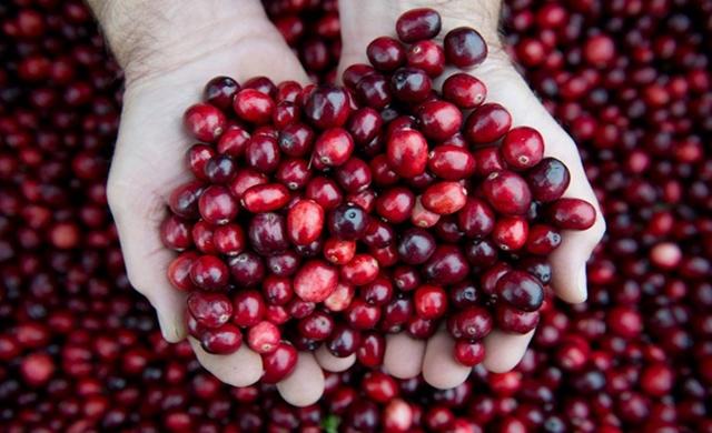 Buah Cranberry untuk Mengatasi Penyakit Flu