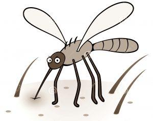 Malaria Vs Demam Berdarah Dengue